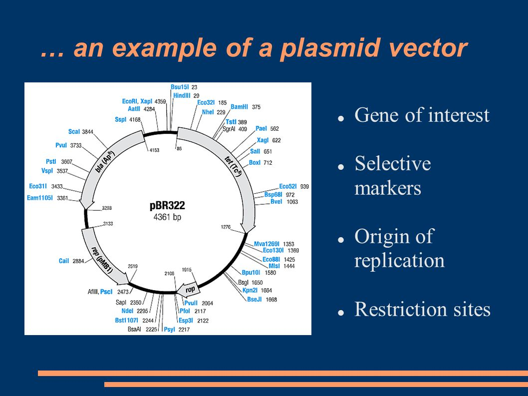 … an example of a plasmid vector Gene of interest Selective markers Origin of replication Restriction sites
