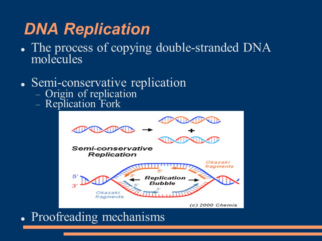 DNA Replication The process of copying double-stranded DNA molecules Semi-conservative replication  Origin of replication  Replication Fork Proofreading mechanisms
