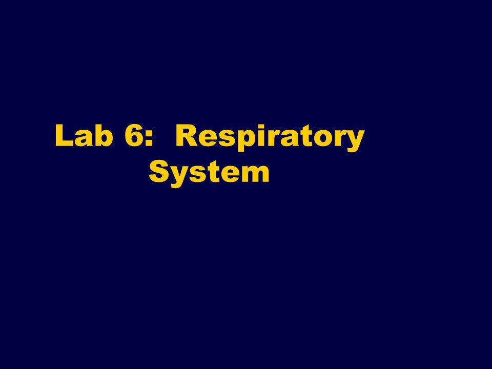 Lab 6: Respiratory System