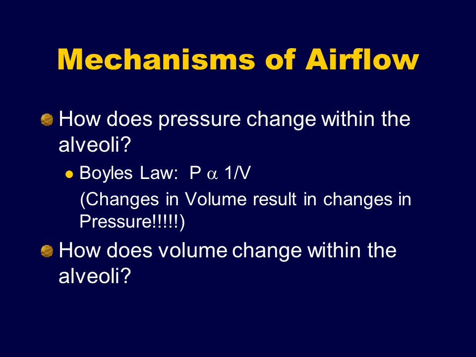 Mechanisms of Airflow How does pressure change within the alveoli.