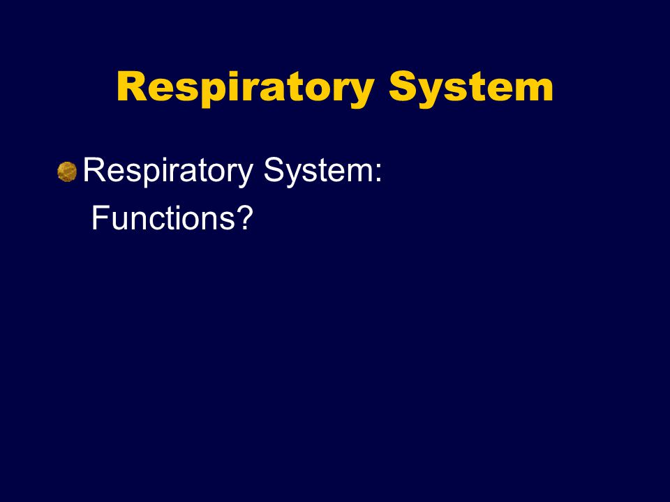 Respiratory System Respiratory System: Functions