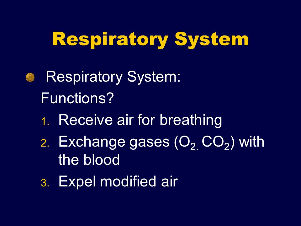 Respiratory System Respiratory System: Functions. 1.