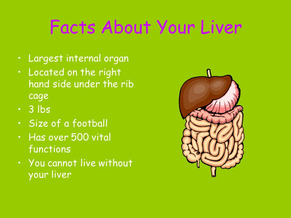 Facts About Your Liver Largest internal organ Located on the right hand side under the rib cage 3 lbs Size of a football Has over 500 vital functions You cannot live without your liver