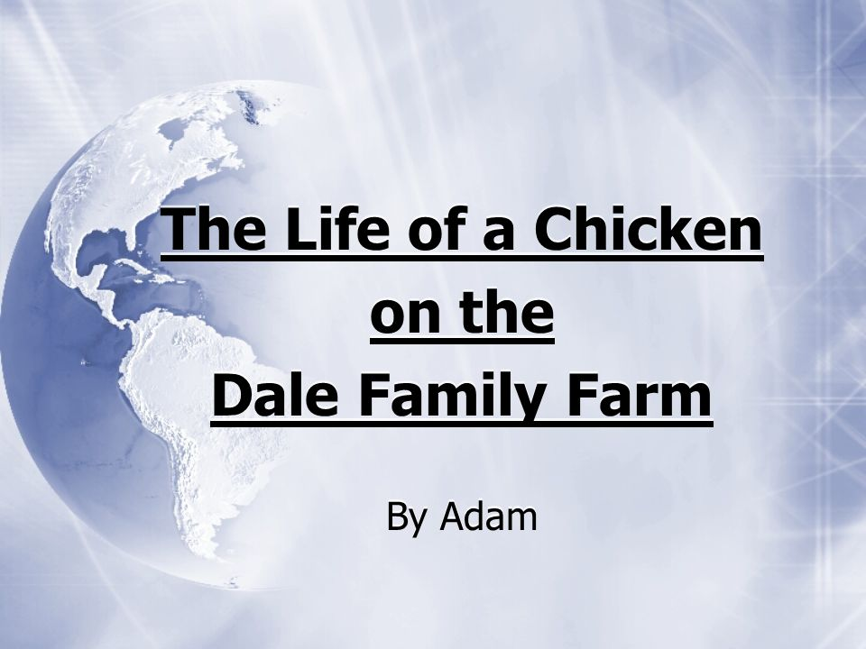 The Life of a Chicken on the Dale Family Farm By Adam The Life of a Chicken on the Dale Family Farm By Adam