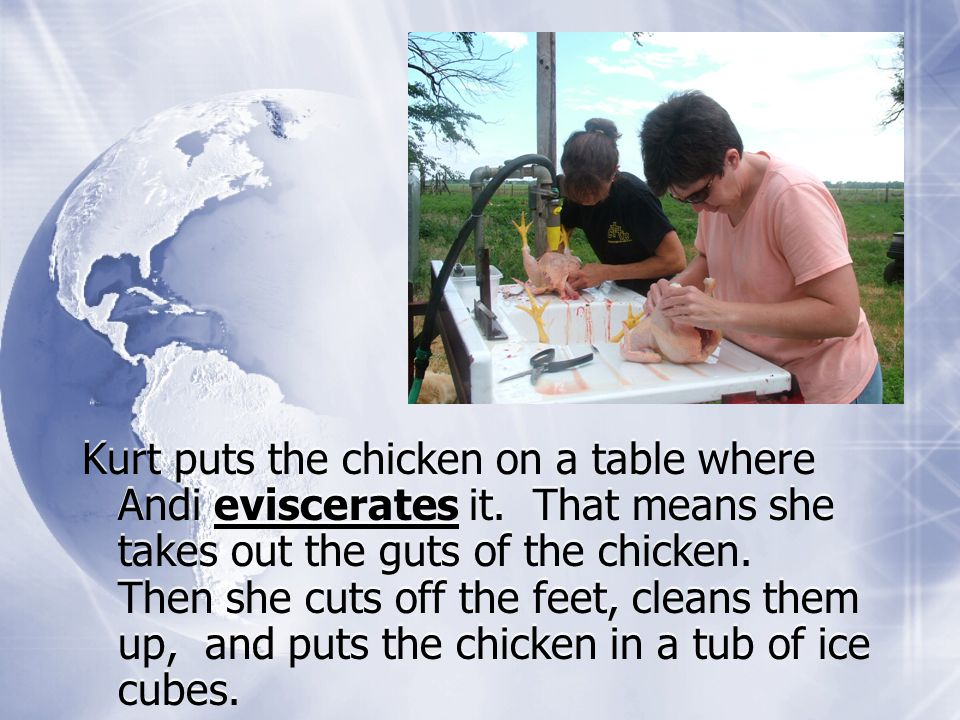 Kurt puts the chicken on a table where Andi eviscerates it.