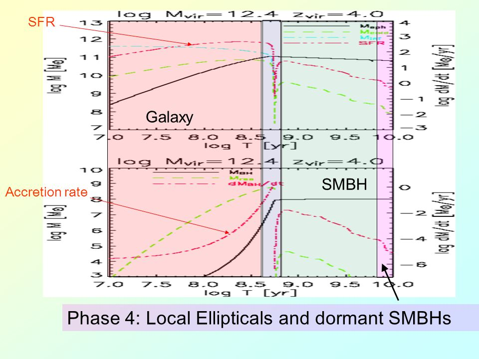 Galaxy SMBH Accretion rate SFR Phase 4: Local Ellipticals and dormant SMBHs