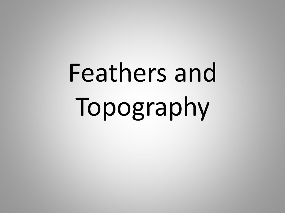 Feathers and Topography