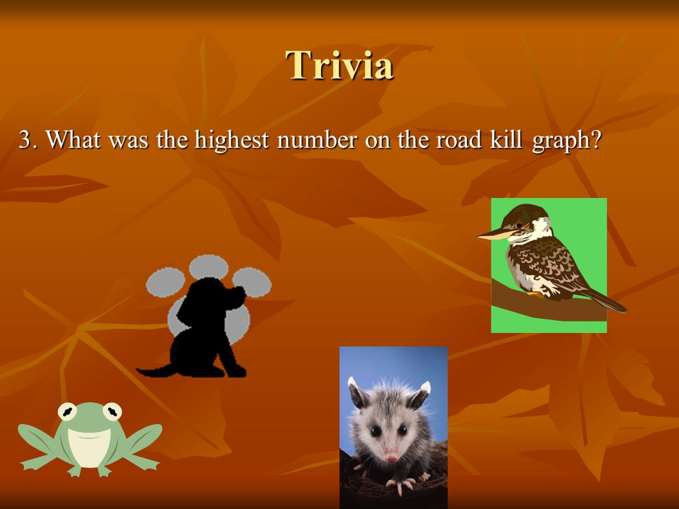 Trivia 3. What was the highest number on the road kill graph