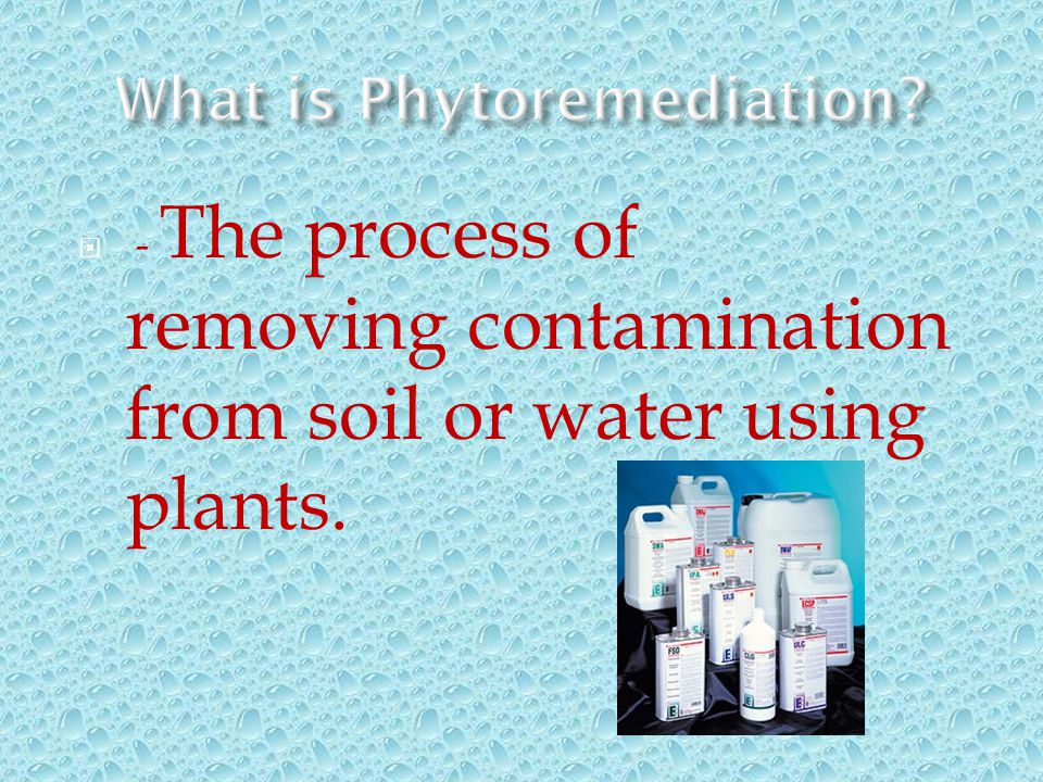 - The process of removing contamination from soil or water using plants.