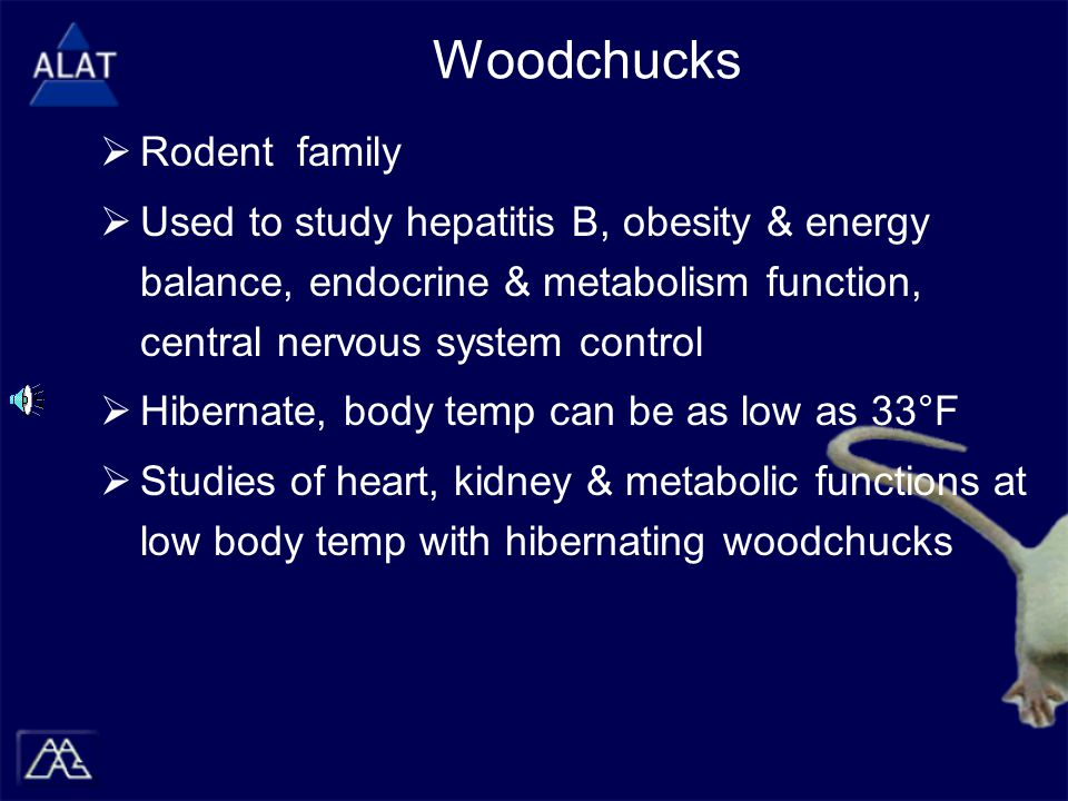 Woodchucks  Rodent family  Used to study hepatitis B, obesity & energy balance, endocrine & metabolism function, central nervous system control  Hibernate, body temp can be as low as 33°F  Studies of heart, kidney & metabolic functions at low body temp with hibernating woodchucks