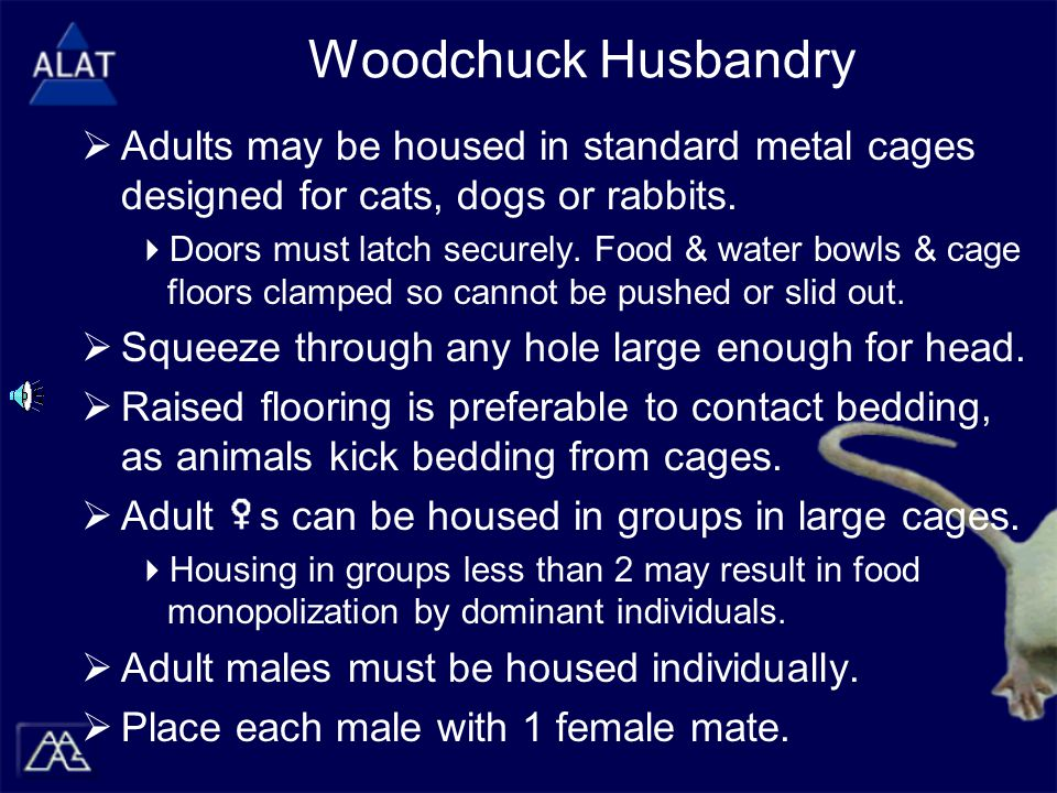 Woodchuck Husbandry  Adults may be housed in standard metal cages designed for cats, dogs or rabbits.
