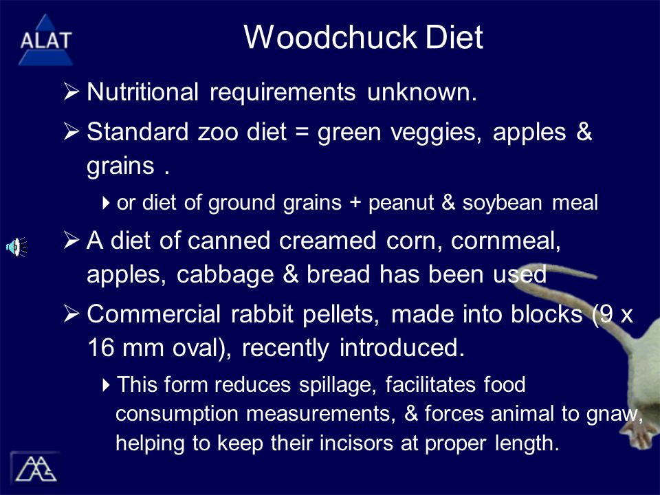 Woodchuck Diet  Nutritional requirements unknown.
