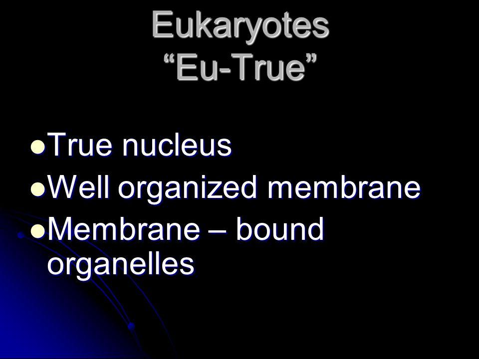 """Eukaryotes """"Eu-True"""" True nucleus True nucleus Well organized membrane Well organized membrane Membrane – bound organelles Membrane – bound organelles"""