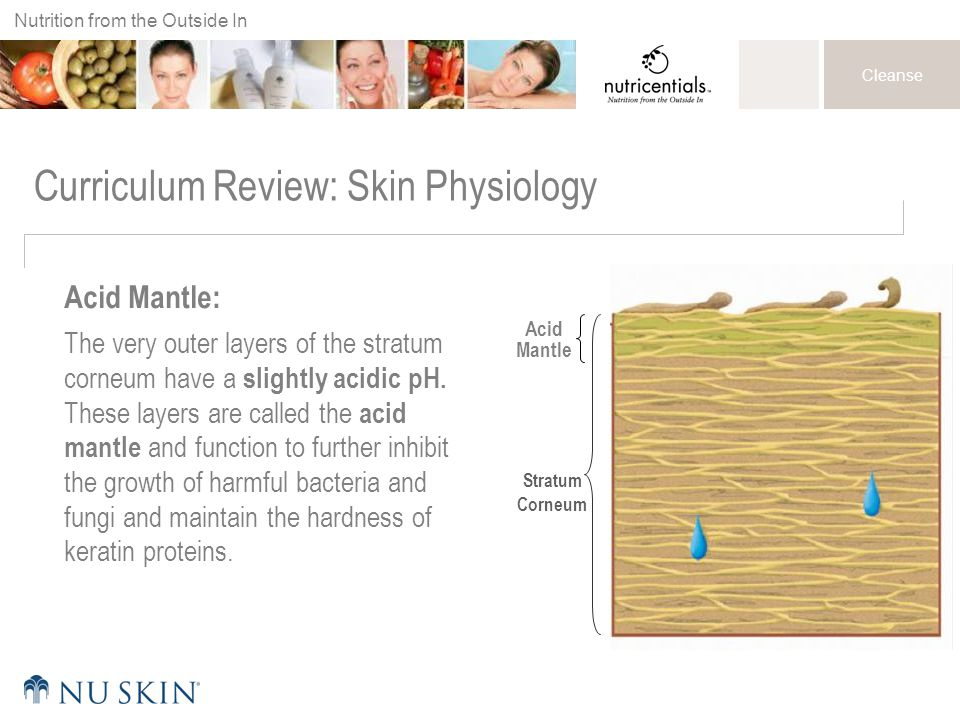 Nutrition from the Outside In Cleanse Curriculum Review: Skin Physiology Acid Mantle: The very outer layers of the stratum corneum have a slightly acidic pH.