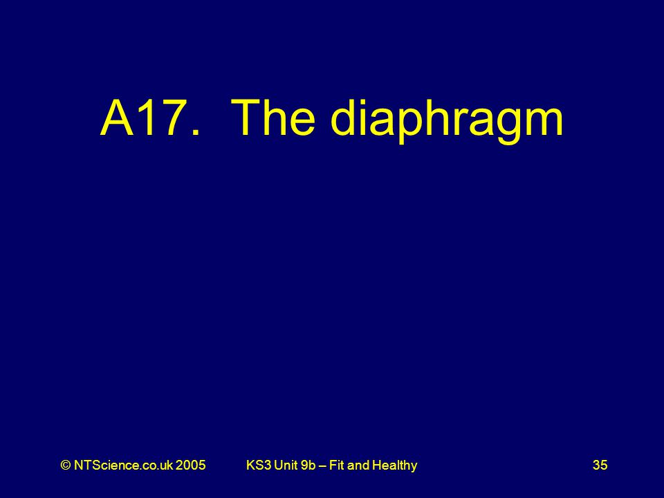 © NTScience.co.uk 2005KS3 Unit 9b – Fit and Healthy35 A17. The diaphragm