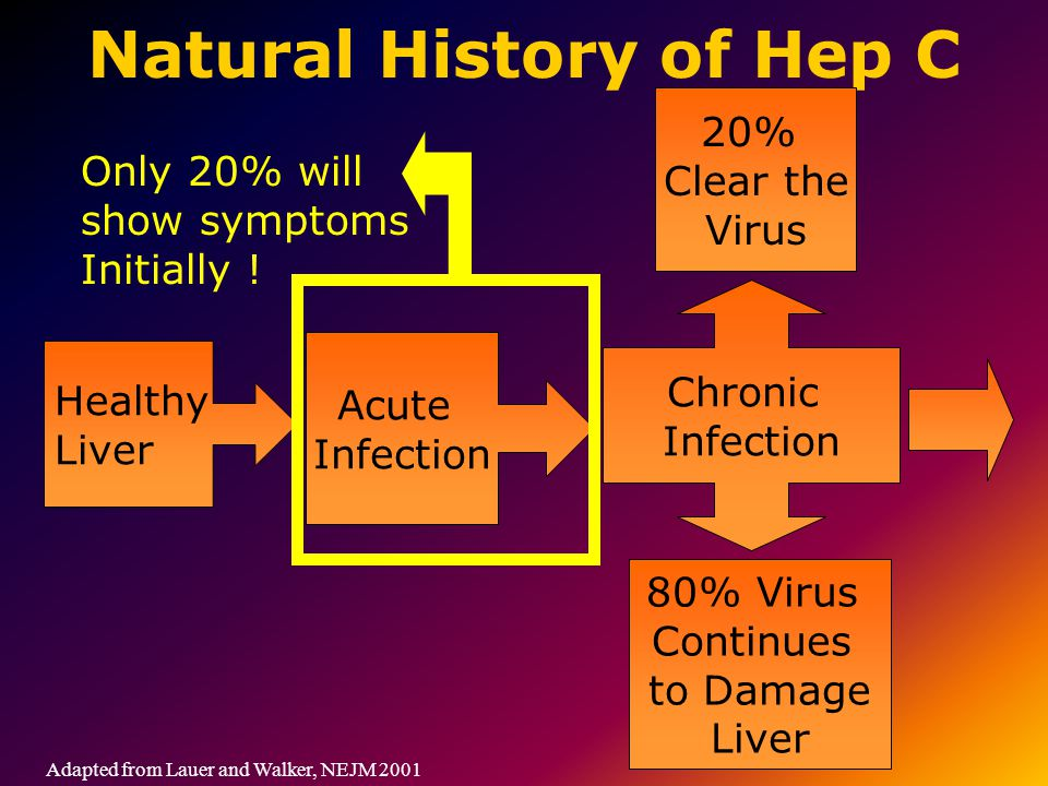 Natural History of Hep C Adapted from Lauer and Walker, NEJM 2001 Healthy Liver Acute Infection Chronic Infection 20% Clear the Virus 80% Virus Continues to Damage Liver Only 20% will show symptoms Initially !