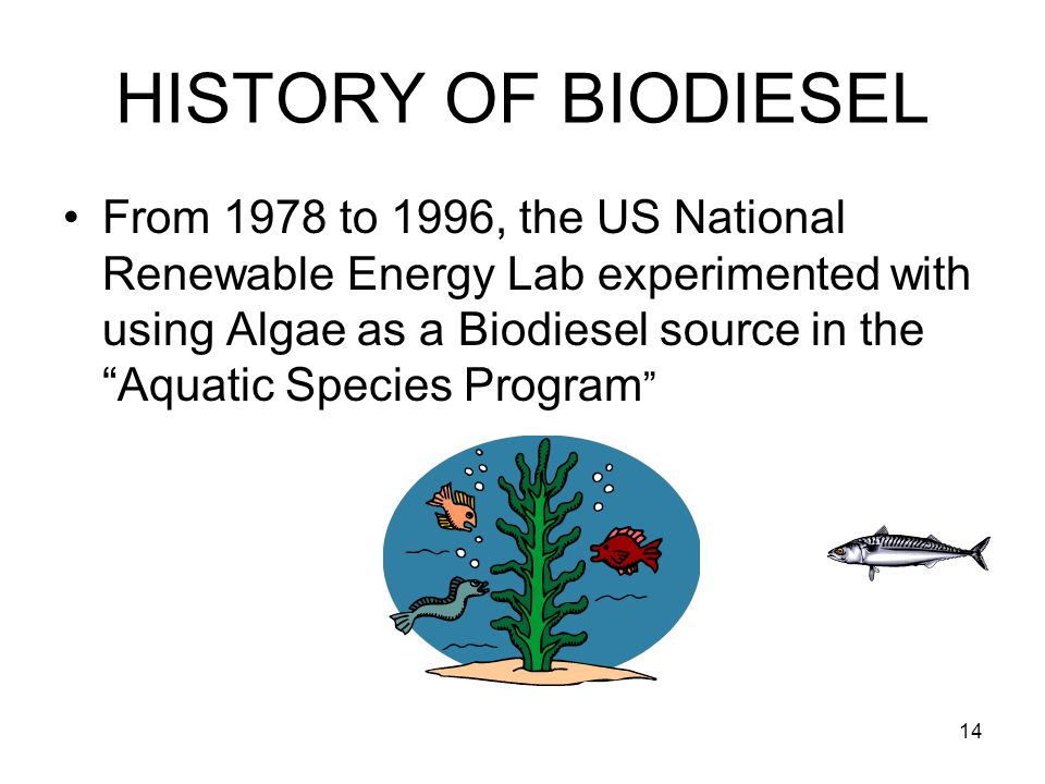 "14 HISTORY OF BIODIESEL From 1978 to 1996, the US National Renewable Energy Lab experimented with using Algae as a Biodiesel source in the ""Aquatic Sp"
