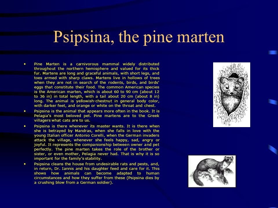 Flora & Fauna in Captain Corelli's Mandolin Introduction This very small slide show gives you some information on the plants and animals that appear in Louis de Berniére' s Captain Corelli's Mandolin, as well as some guidance on their importance in the book.