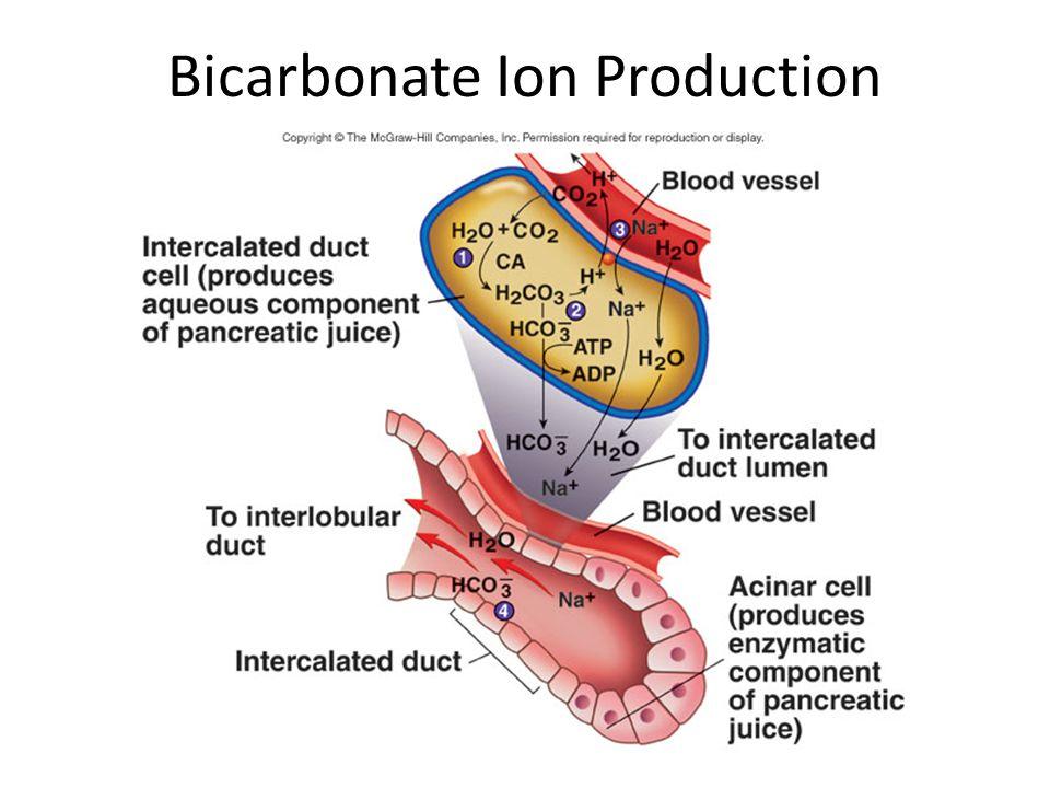 Bicarbonate Ion Production