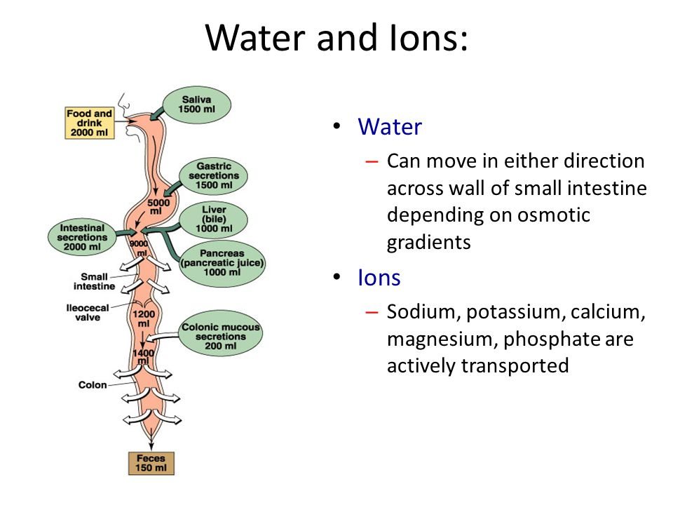 Water and Ions: Water – Can move in either direction across wall of small intestine depending on osmotic gradients Ions – Sodium, potassium, calcium,