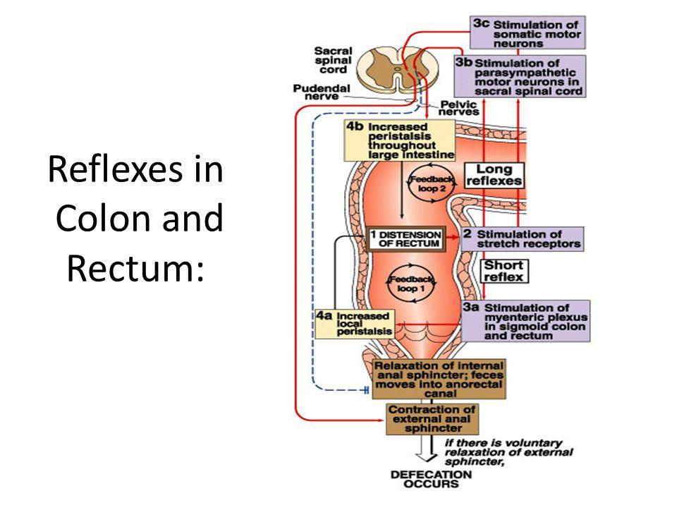 Reflexes in Colon and Rectum: