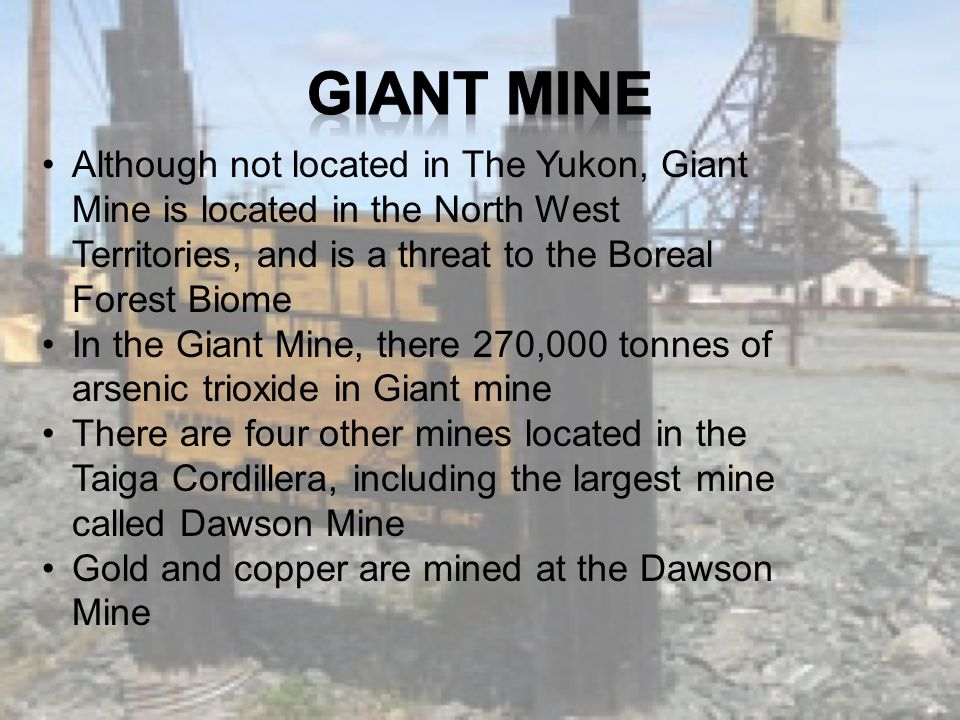 Although not located in The Yukon, Giant Mine is located in the North West Territories, and is a threat to the Boreal Forest Biome In the Giant Mine, there 270,000 tonnes of arsenic trioxide in Giant mine There are four other mines located in the Taiga Cordillera, including the largest mine called Dawson Mine Gold and copper are mined at the Dawson Mine