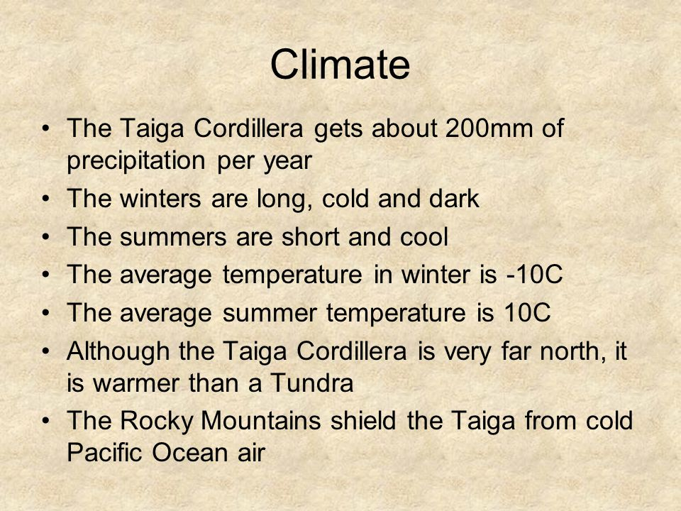 Climate The Taiga Cordillera gets about 200mm of precipitation per year The winters are long, cold and dark The summers are short and cool The average temperature in winter is -10C The average summer temperature is 10C Although the Taiga Cordillera is very far north, it is warmer than a Tundra The Rocky Mountains shield the Taiga from cold Pacific Ocean air