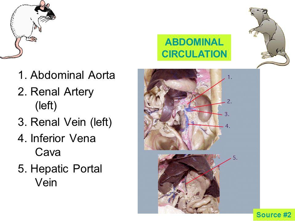 1.Abdominal Aorta 2. Renal Artery (left) 3. Renal Vein (left) 4.
