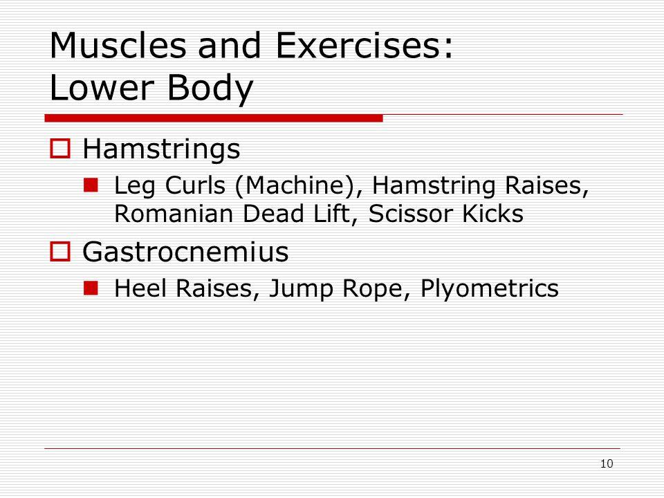 Muscles and Exercises: Lower Body  Hamstrings Leg Curls (Machine), Hamstring Raises, Romanian Dead Lift, Scissor Kicks  Gastrocnemius Heel Raises, Jump Rope, Plyometrics 10