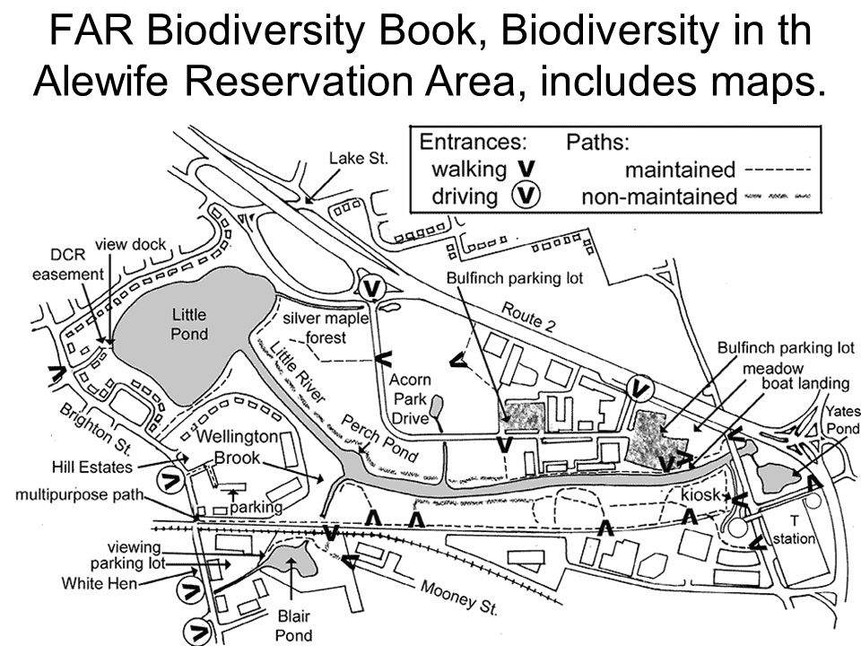 FAR Biodiversity Book, Biodiversity in th Alewife Reservation Area, includes maps.