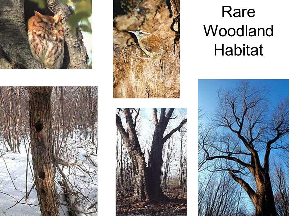 Rare Woodland Habitat