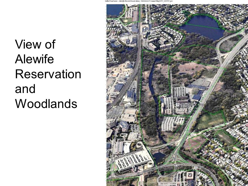 View of Alewife Reservation and Woodlands