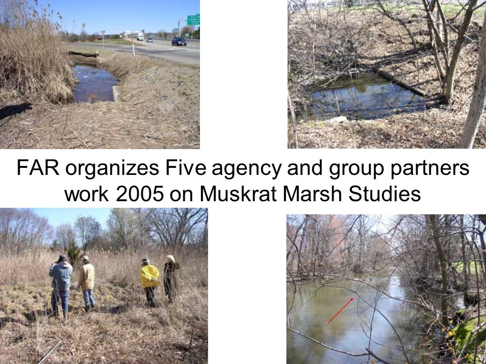 FAR organizes Five agency and group partners work 2005 on Muskrat Marsh Studies