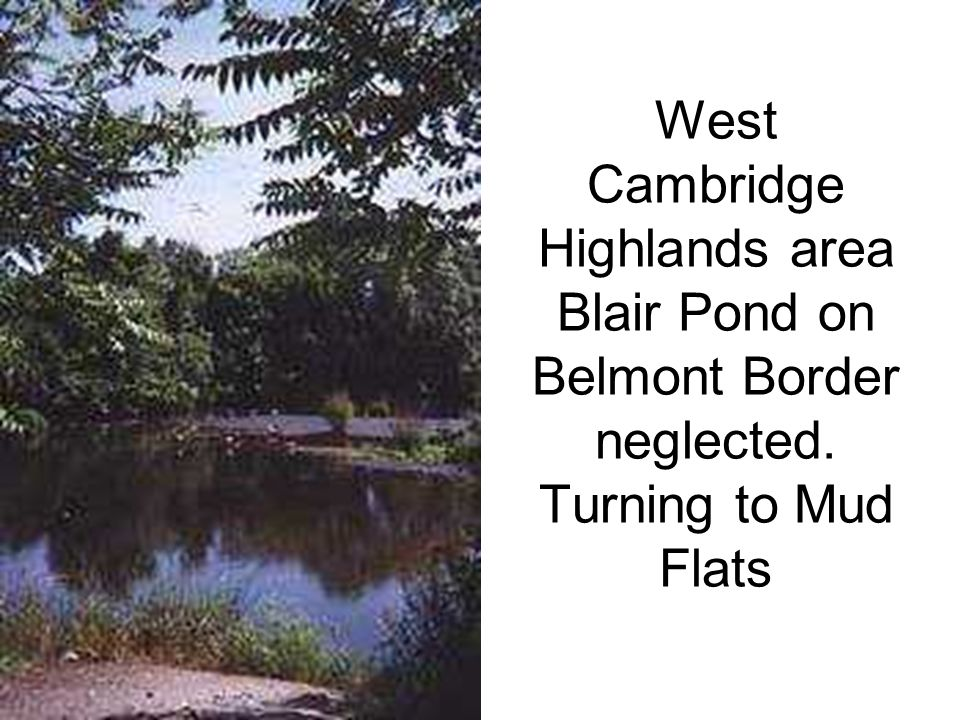 West Cambridge Highlands area Blair Pond on Belmont Border neglected. Turning to Mud Flats