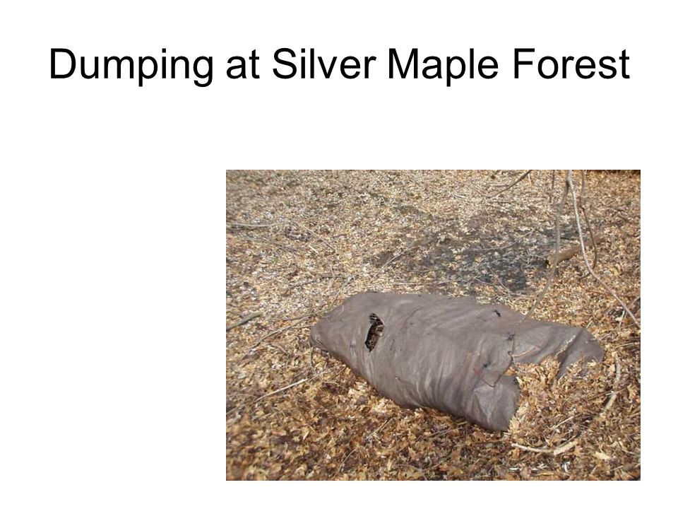 Dumping at Silver Maple Forest