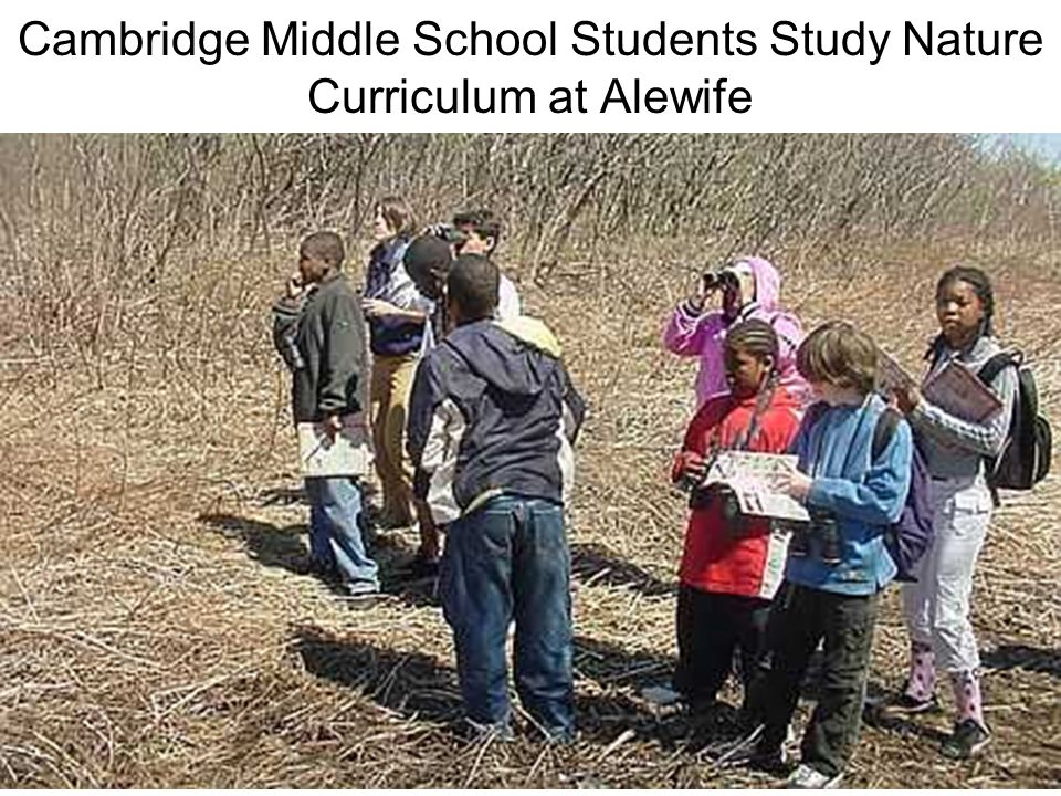 Cambridge Middle School Students Study Nature Curriculum at Alewife