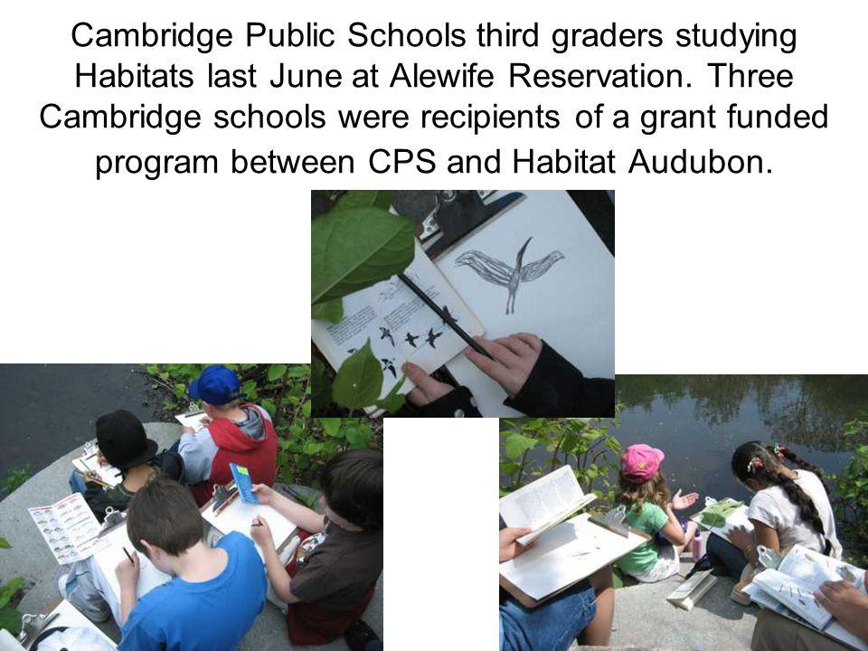 Cambridge Public Schools third graders studying Habitats last June at Alewife Reservation.