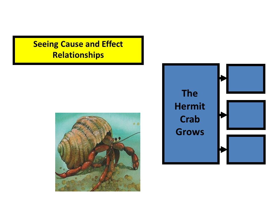 Seeing Cause and Effect Relationships The Hermit Crab Grows