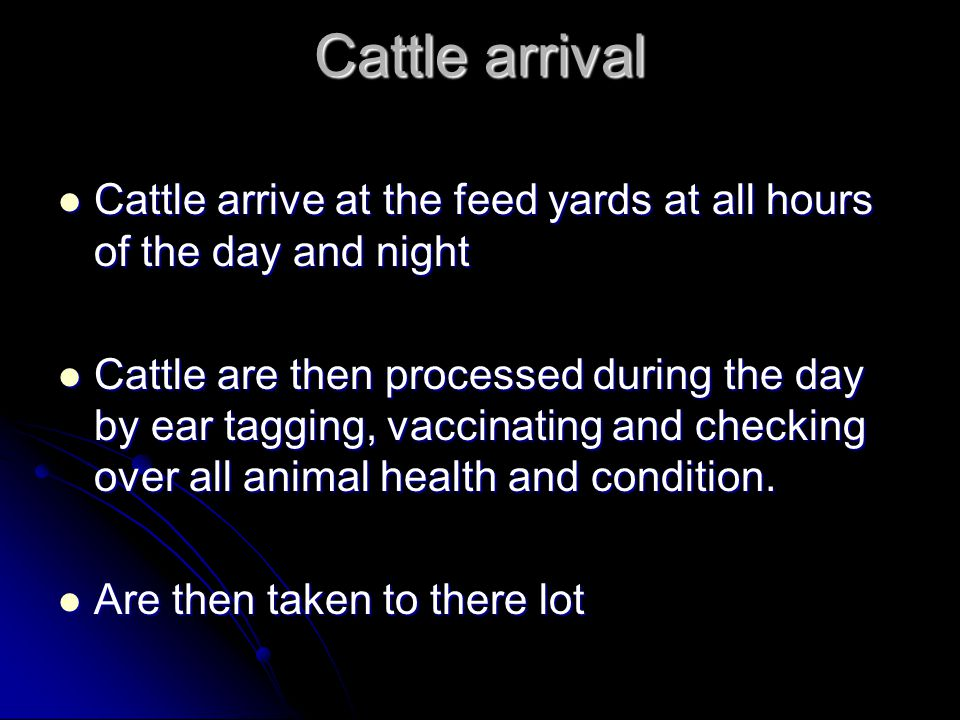 Cattle arrival Cattle arrive at the feed yards at all hours of the day and night Cattle arrive at the feed yards at all hours of the day and night Cattle are then processed during the day by ear tagging, vaccinating and checking over all animal health and condition.