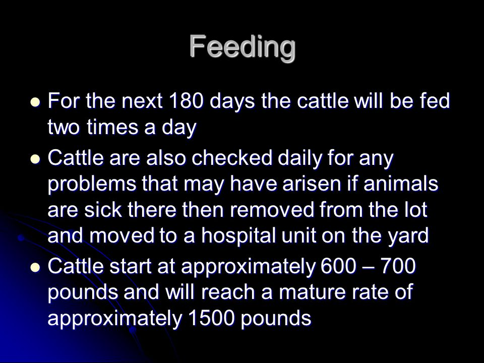 Feeding For the next 180 days the cattle will be fed two times a day For the next 180 days the cattle will be fed two times a day Cattle are also checked daily for any problems that may have arisen if animals are sick there then removed from the lot and moved to a hospital unit on the yard Cattle are also checked daily for any problems that may have arisen if animals are sick there then removed from the lot and moved to a hospital unit on the yard Cattle start at approximately 600 – 700 pounds and will reach a mature rate of approximately 1500 pounds Cattle start at approximately 600 – 700 pounds and will reach a mature rate of approximately 1500 pounds