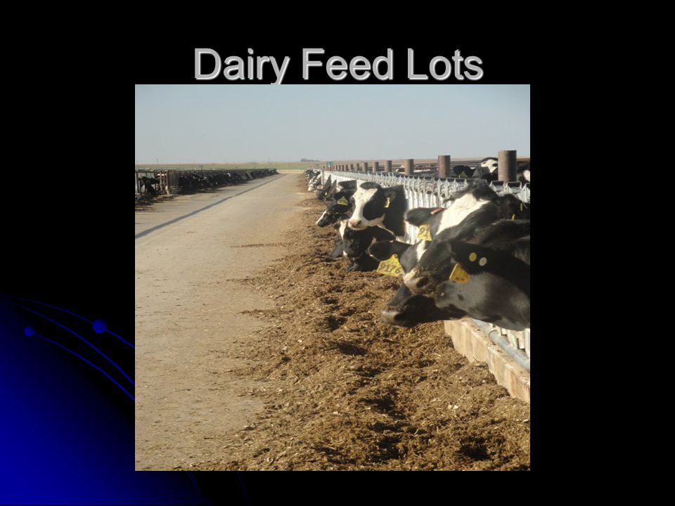 Dairy Feed Lots