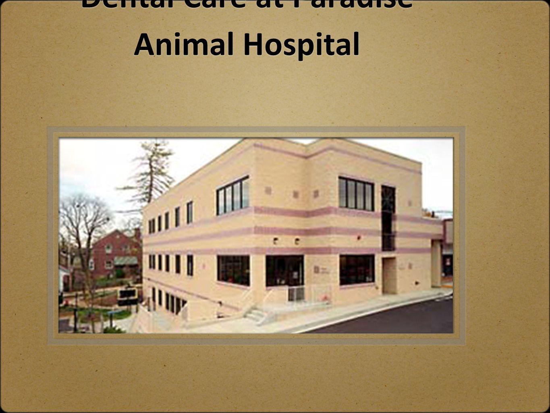 Dental Care at Paradise Animal Hospital