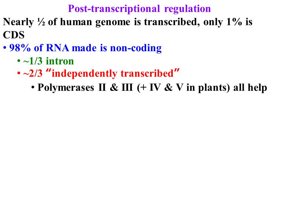 "Post-transcriptional regulation Nearly ½ of human genome is transcribed, only 1% is CDS 98% of RNA made is non-coding ~1/3 intron ~2/3 ""independently"