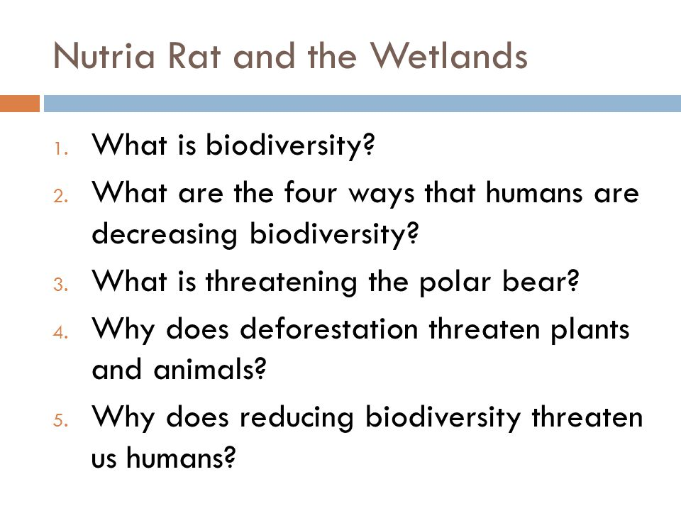 Nutria Rat and the Wetlands 1. What is biodiversity.