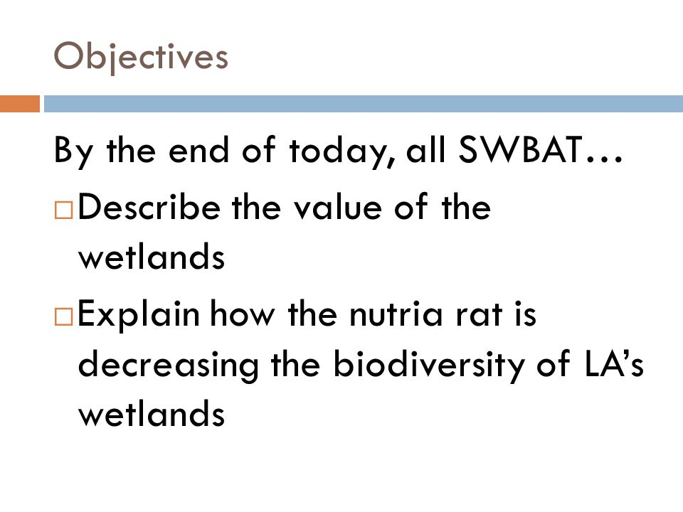 Objectives By the end of today, all SWBAT…  Describe the value of the wetlands  Explain how the nutria rat is decreasing the biodiversity of LA's wetlands