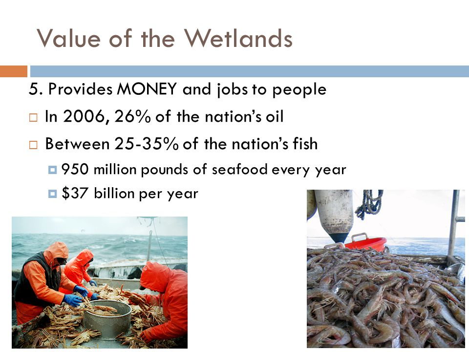 Value of the Wetlands 5.