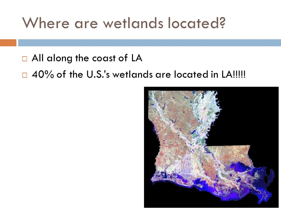 Where are wetlands located.