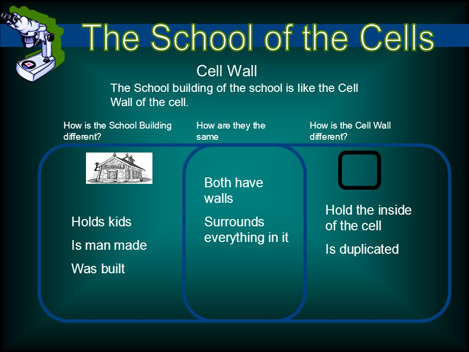 Cell Wall The School building of the school is like the Cell Wall of the cell.