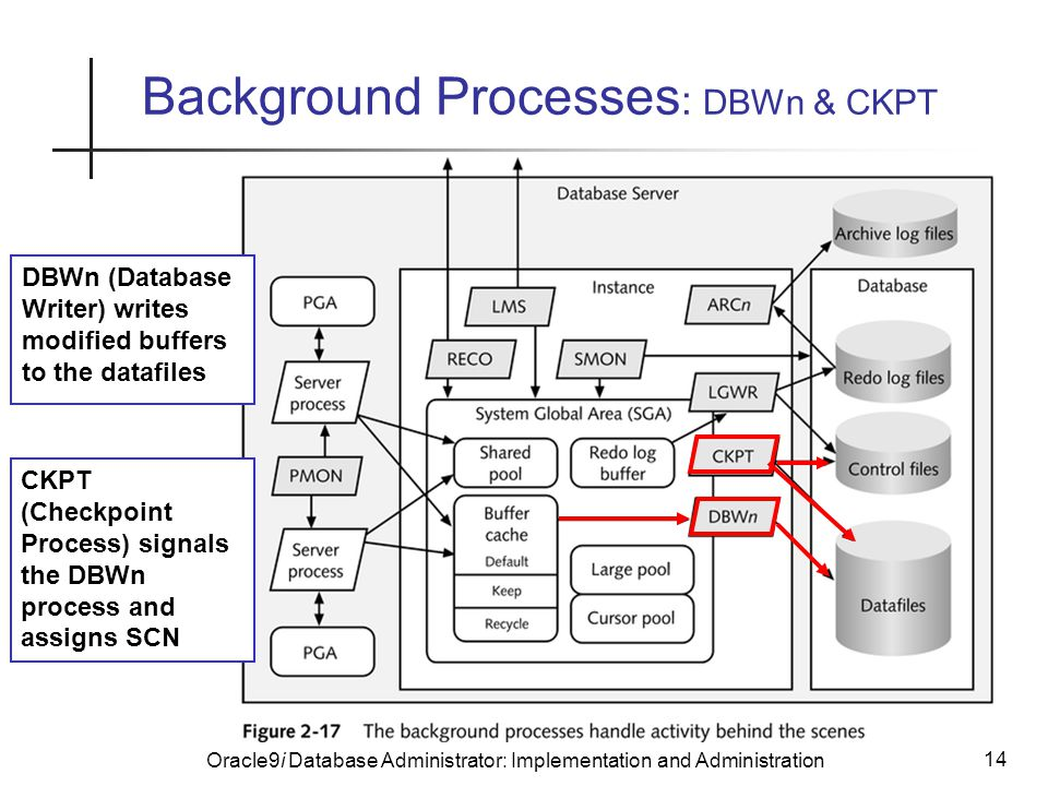 Oracle9i Database Administrator: Implementation and Administration 14 Background Processes : DBWn & CKPT DBWn (Database Writer) writes modified buffers to the datafiles CKPT (Checkpoint Process) signals the DBWn process and assigns SCN