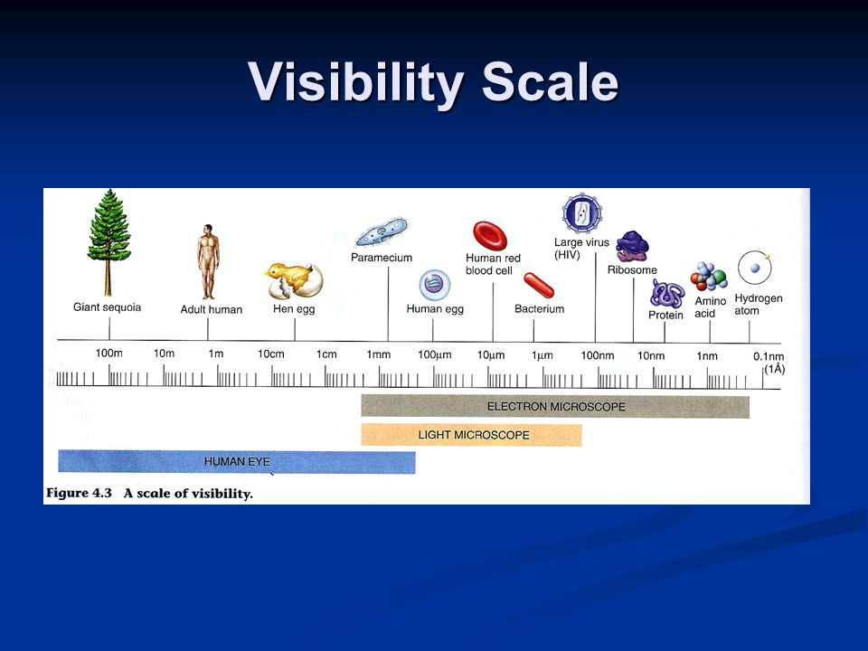 Visibility Scale